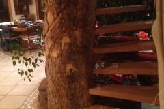 Escalier en bois encastré dans un arbre