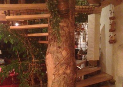 escalier-en-bois-contre-arbre